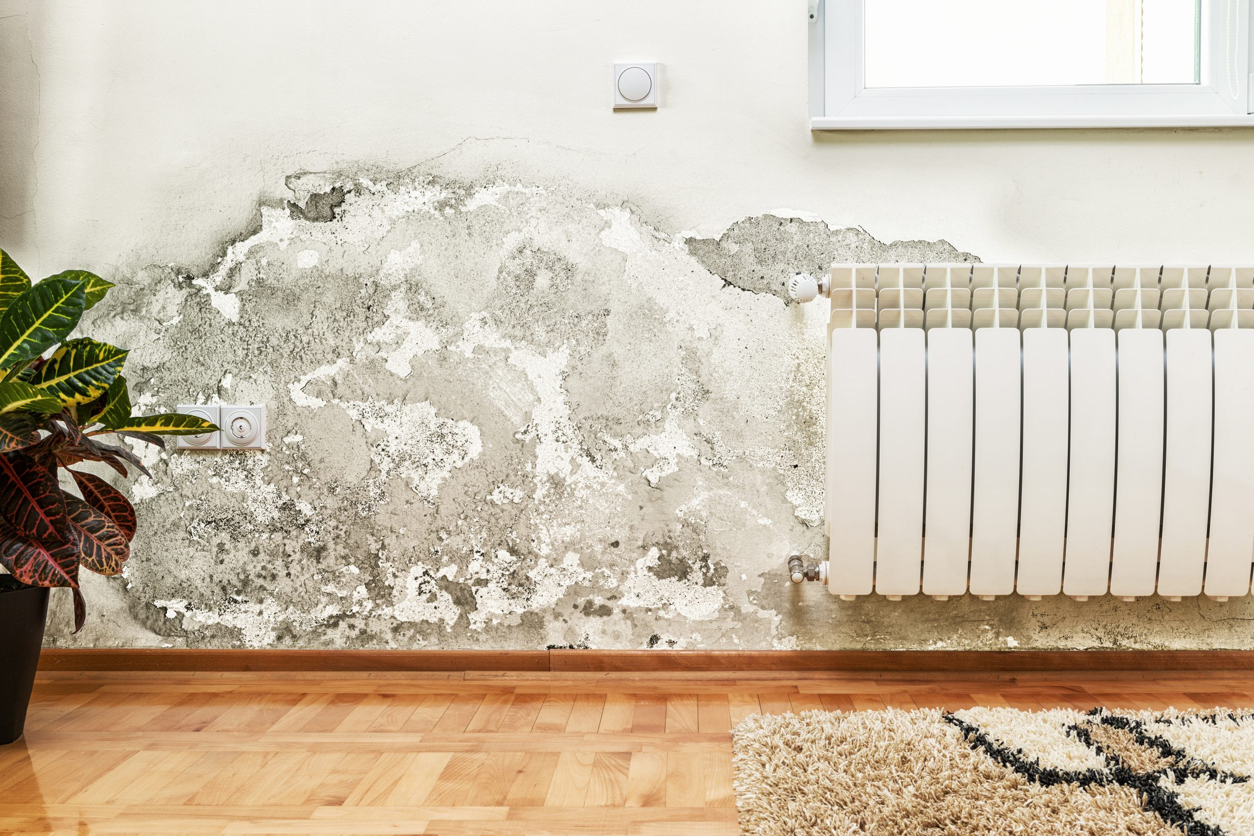 What to Do When Your Home or Business Falls Victim to Water Damage