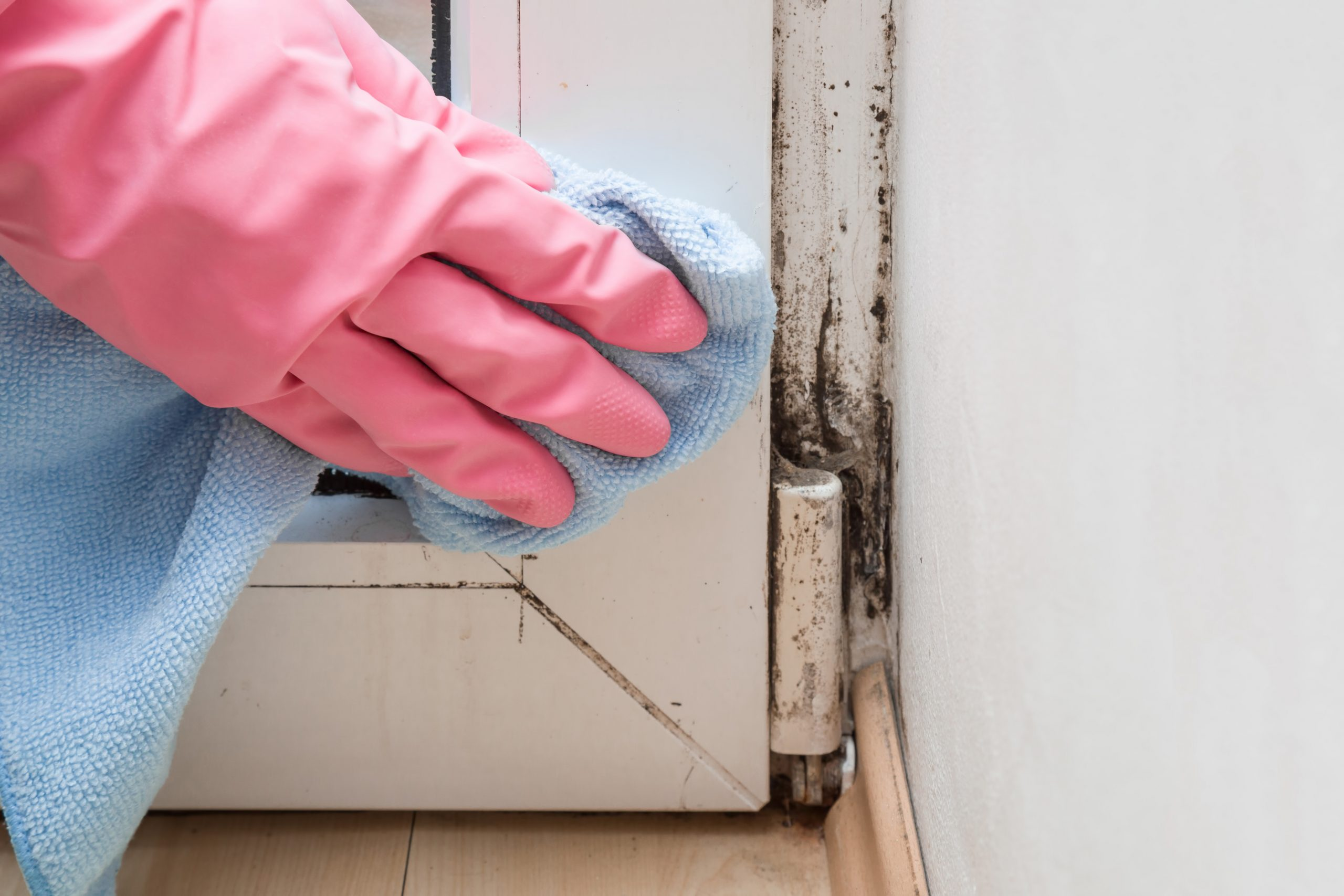How to Treat Common Types of Mold